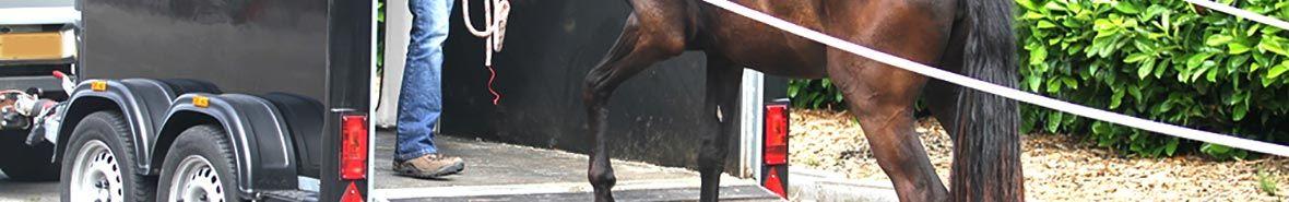 Masta Aanhangwagens Paardentrailer